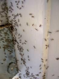 small black ants in bathroom bjyoho com