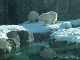 Anchorage Zoo Lights by Meeting Arctic Wildlife At Anchorage U0027s Alaska Zoo Travel Tales
