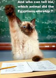 Raising Hand Meme - cat raising hand justpost virtually entertaining