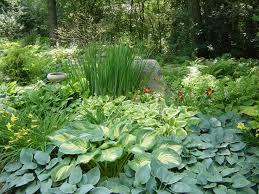 73 best woodland gardens images on pinterest woodland garden