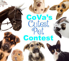 cova u0027s cutest pet contest virginia beach va