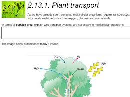 bsp biology teaching resources tes