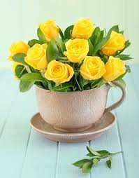 roses teacups 22 best our teacup roses images on flowers teacup and