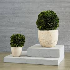 boxwood trees mini west elm au