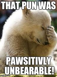 Meme Pun - facepalm bear meme imgflip