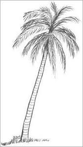 drawn palm tree pencil drawing pencil and in color drawn palm