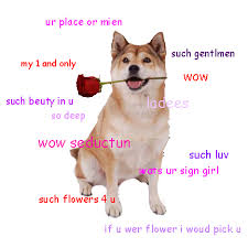 Much Dog Meme - wow such dog meme oh wow so doge the meme of the day much wow