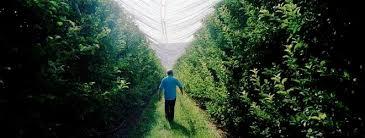 chambre r馮ionale d agriculture paca a marseille 30 ans de décentralisation en photos et en web doc