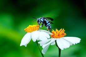 was ist das für ein insekt eine wanze oder was urlaub insekten biene auf blume biene insekt wanze stockbild bild