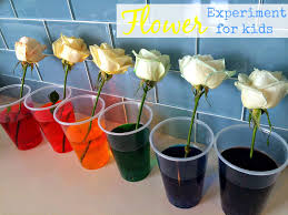 blue skies ahead flower science experiment for kids