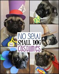Cheap Dog Costumes Halloween 25 Small Dog Halloween Costumes Ideas Small