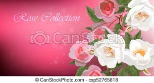 roses and butterflies wedding or greeting card designt with