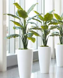 shop quality philodendron silk floor plant at officescapesdirect