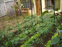 Best Vegetables For Small Garden by 9 Tips For Turning Your Front Yard Into A Farm