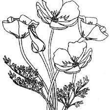 remembrance bouquet poppy coloring remembrance