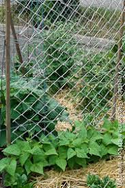 Vertical Garden Trellis - garden trellis ideas