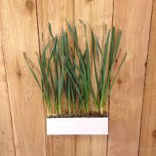 outdoor planters u2022 nifty homestead