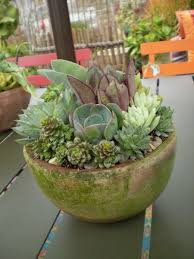 succulent container ideas for residence u2022 wonderfulday in home