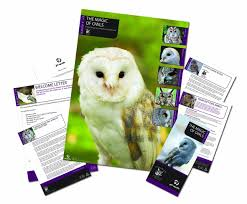 gift republic adopt it adopt an owl amazon co uk garden u0026 outdoors