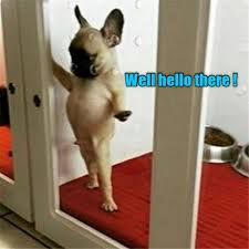 Funny Hello Meme - well hello there funny dog