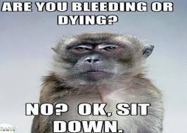 Dying Memes - funny animal pictures are you bleeding or dying no ok sit down