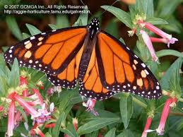 beneficial insects in the landscape 66 butterflies u0026 pollination