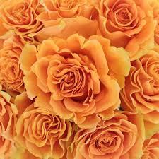 bulk roses fiction sunset bulk flower images