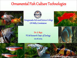 ornamental fish culture technologies pdf available