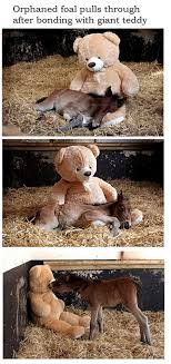 Meme Teddy Bear - orphaned pony s best friend is a teddy bear called button the
