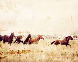 mustang horse running wild horses run away horse photography by kelly angard kelly