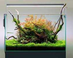 Aquascape Led Lighting 32 Best The Island Images On Pinterest Aquascaping Planted