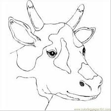 spotty cow head coloring page free cow coloring pages