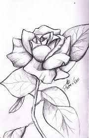 25 trending rose drawing simple ideas on pinterest rose drawing