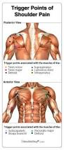 Anatomy Of Shoulder Muscles And Tendons 17 Best Images About Tendons On Pinterest Supraspinatus Tendon