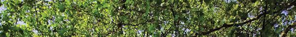shade tree discounts cedar falls utilities