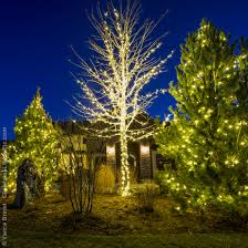 lights for trees outdoors looking home design