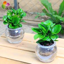 Small Desk Plants China Desk Plant Decoration China Desk Plant Decoration Shopping
