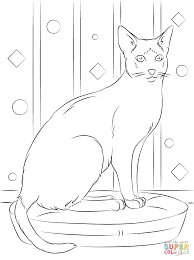 sitting siamese cat coloring page free printable coloring pages