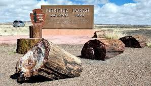 are these giant prehistoric trees secret energy
