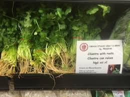 Massachusetts Vegetaion images Cilantro worldcrops JPG