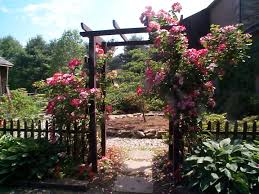 Patio Tree Rose by Garden Design Bucks County Rose Garden Blog Stone Creek