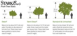fruit tree sizes stark bro s