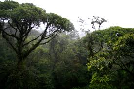 Above The Canopy by Bohemian Adventures Aerial Tram Through The Rainforest