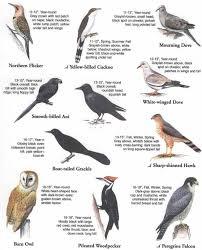 sunnys wildlife on identifying birds
