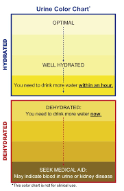 How To Check If You by This Is How To Check Your Urine Color To Tell If You U0027re Dehydrated