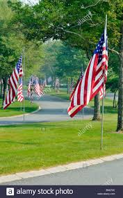 american flags lining street entrance at the national cemetery in
