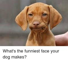 Funny Dog Face Meme - what s the funniest face your dog makes meme on me me