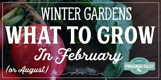 what to plant in your winter vegetable garden in february or august