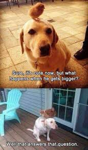 Live Laugh Love Meme Best 20 Funny Chicken Pictures Ideas On Pinterest U2014no Signup
