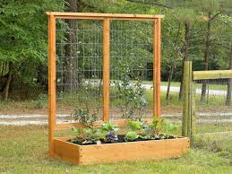 picture of a trellis solidaria garden